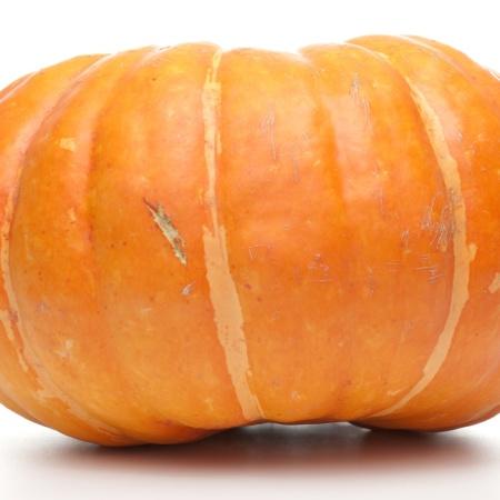 homemade dog treats pumpkin